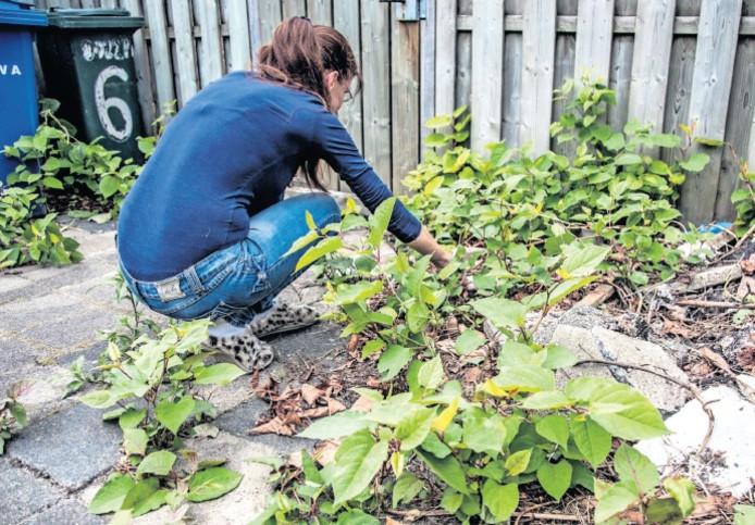 Willeke Olthuizen als ze het resultaat aanschouwt van een weekje groeien in haar tuin.