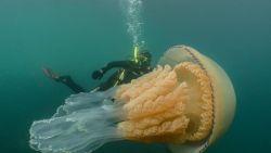 Enorme kwal van 1,5 meter gespot voor Zuid-Engelse kust