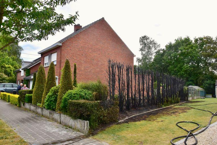 Een flink stuk haag ging in vlammen op, langs de Deken Wallaertstraat in Beveren bij Roeselare.