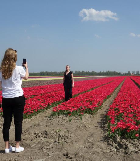 Tulpenroute in bloei, amateurfotografen gaan los