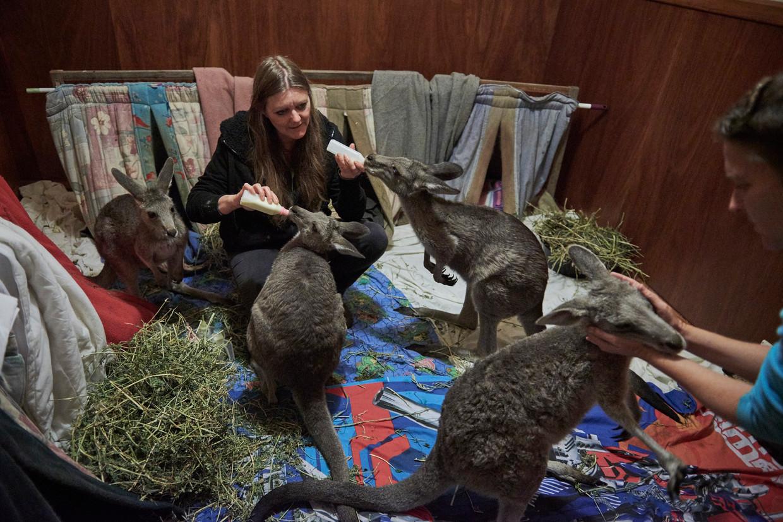 Susan Pulis (l) en Wendy Hendrickson vangen kangoeroes op een slaapkamer thuis.   Beeld Christina Simons /NYT/HH