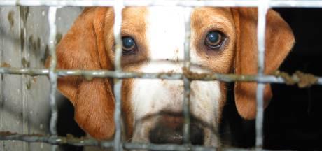 Animal Rights kondigt protestactie met Beagles aan bij proefdiercentrum Den Bosch