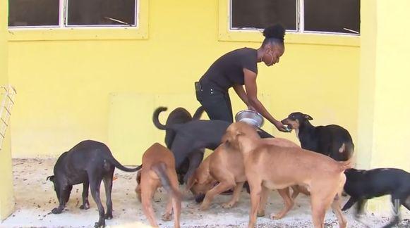Eén van de medewerkers met enkele honden die ongedeerd bleven.