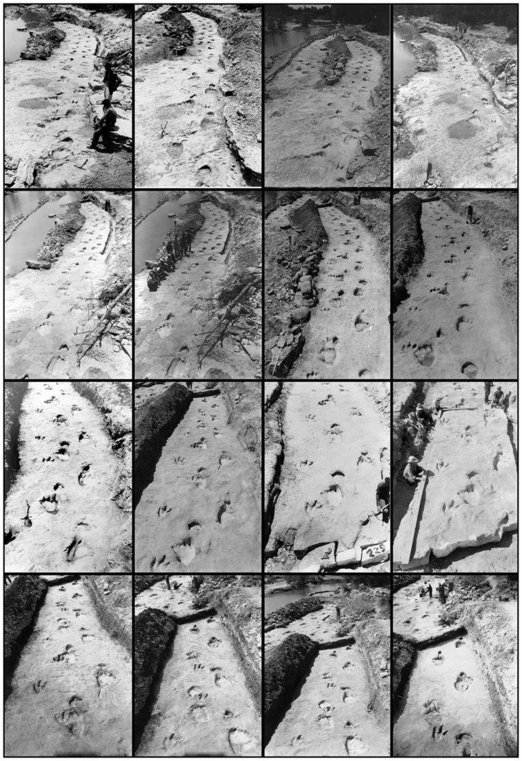 De foto's van het spoor van de dinosaurussen die in 1940 werden gemaakt.