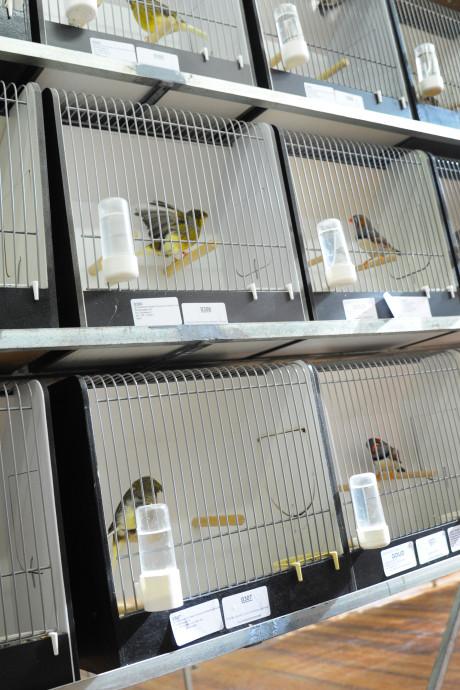 Duizend vogeltjes in duizend kooitjes