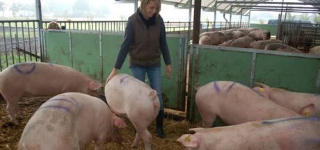Erps varkensbedrijf Vair stopt en gaat op in nieuwe formule