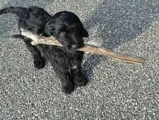 Hond Smokey gevonden in Lochem
