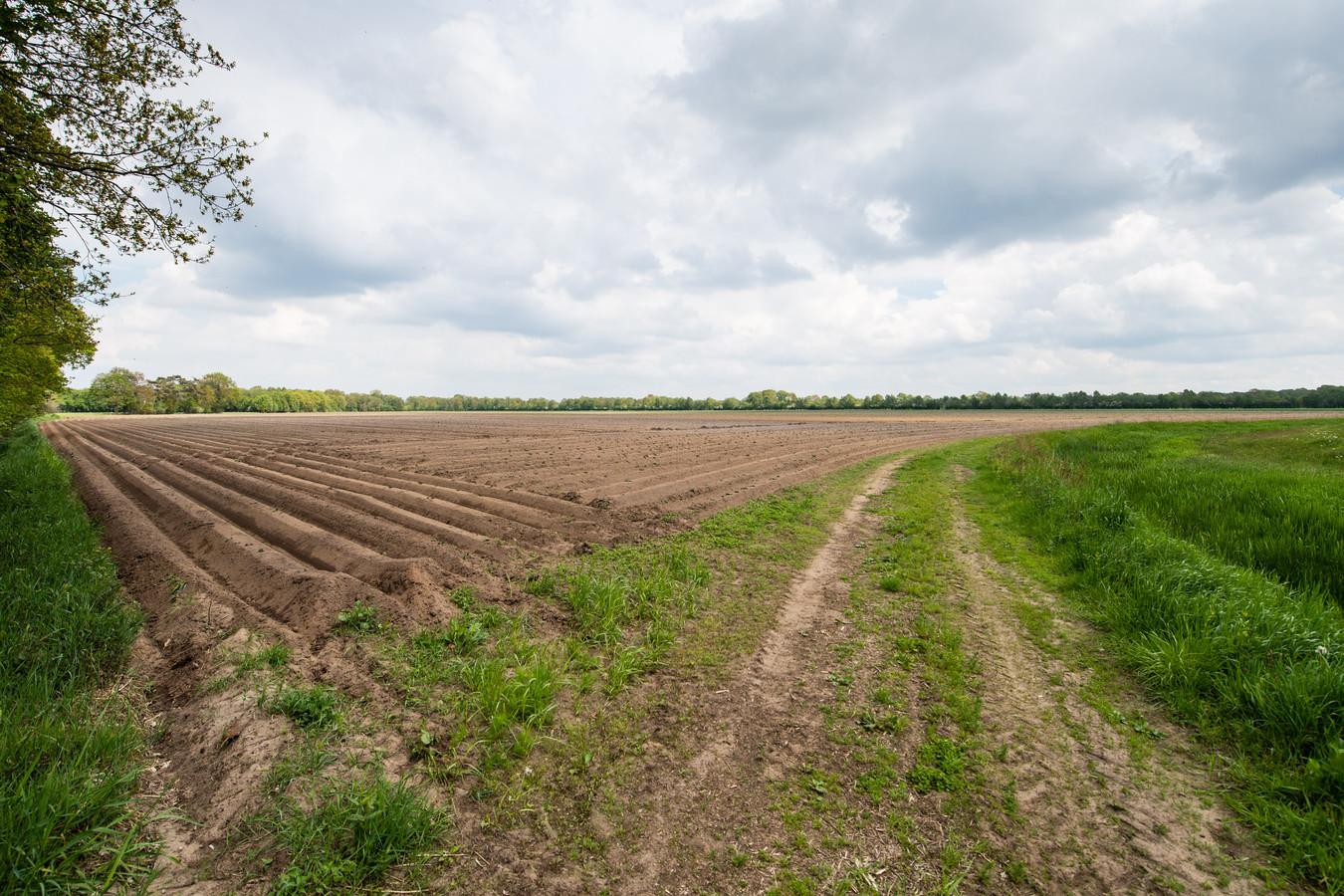De 16 hectare akker aan de Zendvelderweg, tussen Munsterdijk en Zoddebeek, waar een aanvraag tot inrichting van een zonnepark voor is ingediend.