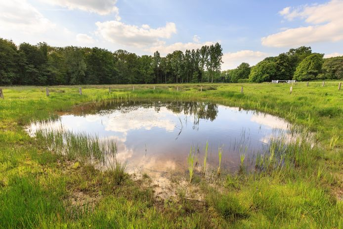 De natuur en de rust, zoals hier op de Hakenberg in Losser, vinden vakantiegangers vooral aantrekkelijk in Overijssel.