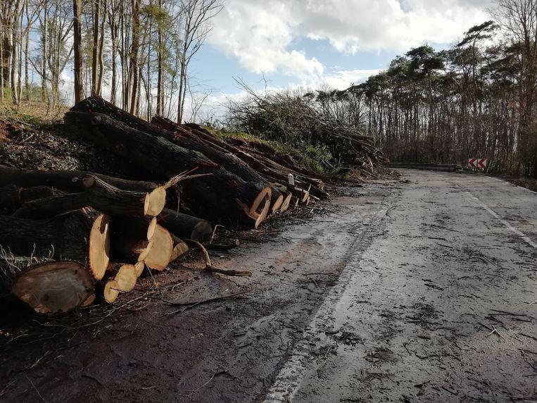 De hele flank van de Turnhoutsebaan werd gekapt.