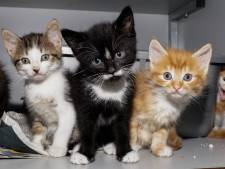 Stichting Zwerfkatten Rijnmond houdt open dag