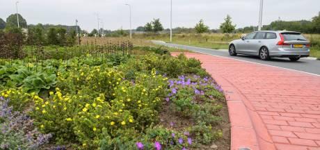 Bloemen in de bermen: een succesvolle bestrijding van de eikenprocessierupsen in Haaksbergen