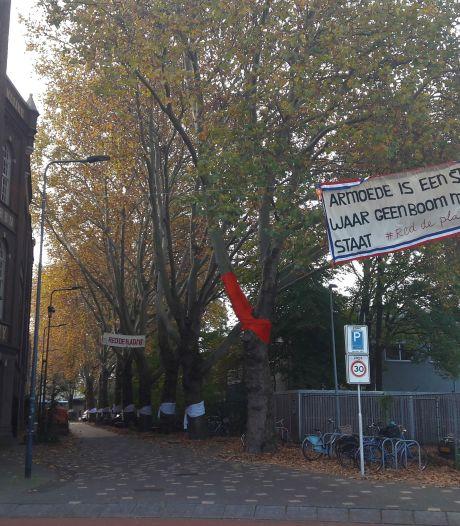 'Rijk móet betalen voor behoud bomen Boschveldweg'<br>