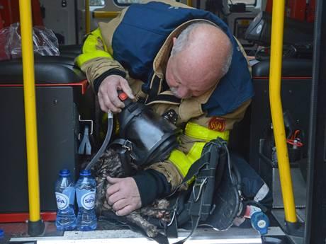 Poes Minoes uit Apeldoorn ontsnapt aan de dood dankzij deze brandweerman