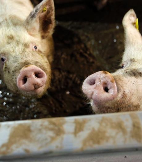 Vooral zuivelboeren worden biologisch, aantal bioboeren stijgt in Brabant