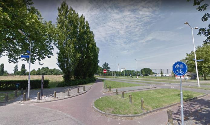 De rij Italiaanse populieren langs de Industrieweg in Nijmegen die de gemeente wil kappen.