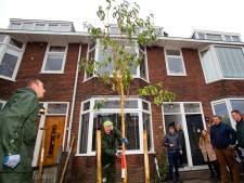 Eerste Dordtse jubileumboom de grond in