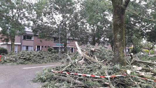 De ravage in de Europalaan in Rheden na de storm.
