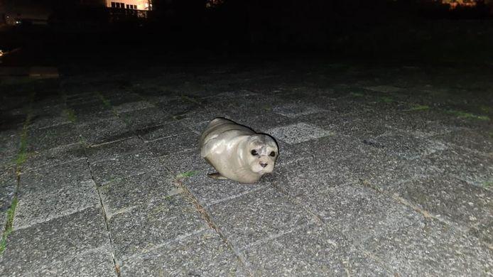 Het zeehondje vindt het goed toeven bij Port Zélande.