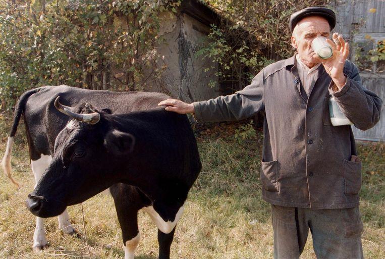 Op deze foto gemaakt in 1999 drinkt boer Andrey Rudchenko verse melk van zijn koe binnen de radioactieve zone nabij de kerncentrale in Tsjernobyl. Beeld epa