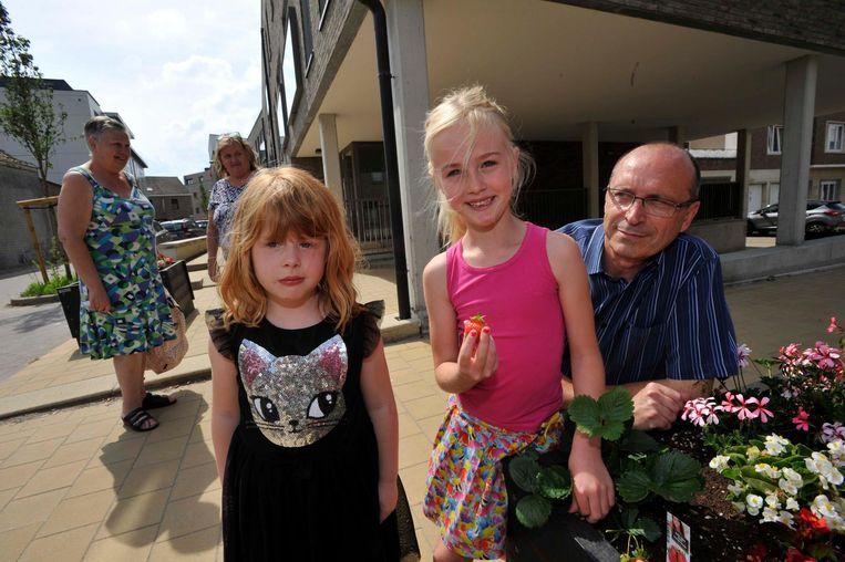 Mila (8) en Esther (5) plukken samen met Groenambtenaar Eric Kumps de eerste aardbeien.