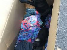 Duitse douane onderschept illegaal hondentransport van Bulgarije naar Nederland