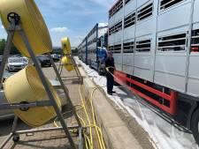 Slachterij zorgt voor verkoeling: 'Willen varkens geen vervelend laatste uur bezorgen'