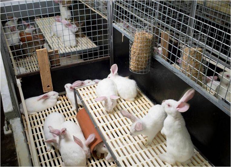 De Boerenbond lanceerde in 2012 dit parksysteem waar de konijnen iets meer plaats hebben.