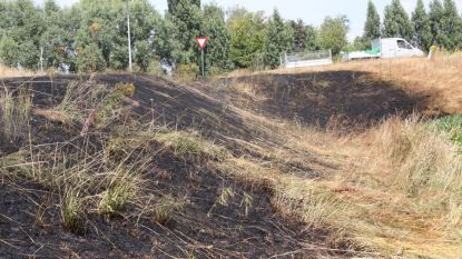 Berm langs E17 afgebrand