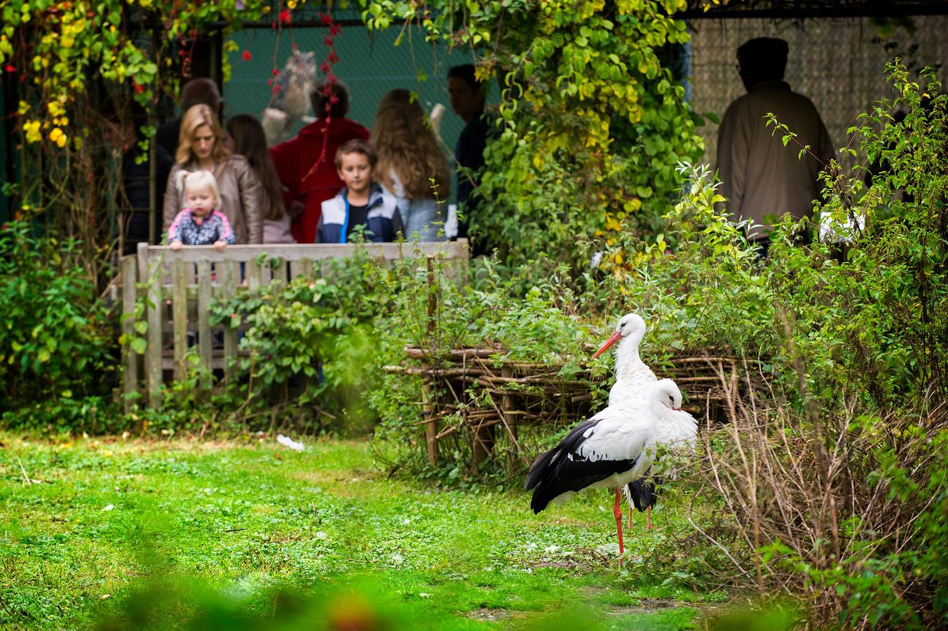 Bij het Vogelrevalidatiecentrum Zundert wordt regelmatig een open dag gehouden. Vaak leidt dat tot een aantal broodnodige nieuwe donateurs