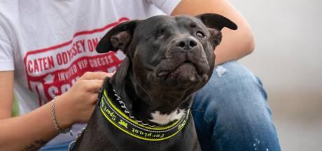 Politie heropent intern onderzoek naar door agenten mishandelde hond