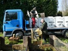 Franse regenboogforel spartelt Boxtels bassin in bij Schutskuil