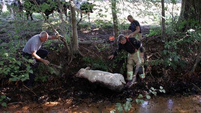 Brandweer redt kalf uit modder