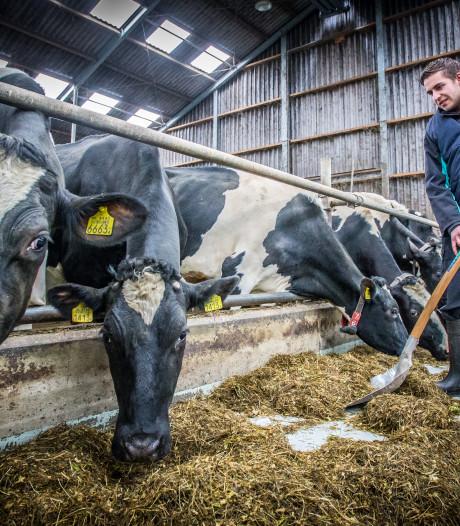 Open dag zet melkveehouderij in de spotlights