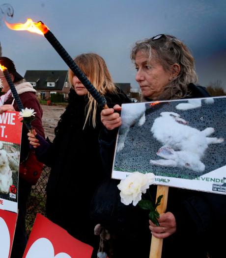 Konijnenfokkers: We zijn lastercampagnes en intimidaties zat