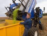 Carl Huybrechts, van tv-presentator tot olijfboer: «Na zes jaar de eerste oogst, zó emotioneel»