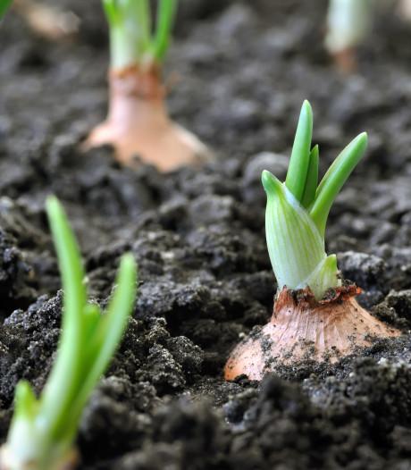 Plantjes tegen inlevering van tuintegels is een groot succes in Breda