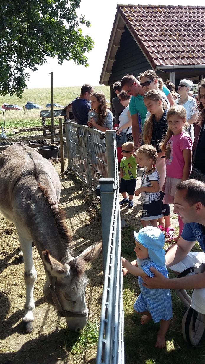 De ezel op het schaapscheerdersfeest Hansweert.