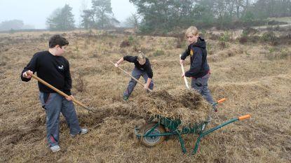 Leerlingen GITOK tonen groene vingers op Kalmthoutse Heide