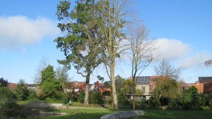 Afgestorven bomen in Park Vande Walle ruimen plaats voor nieuwe