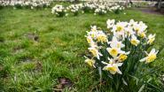 De Vossen op lentetocht