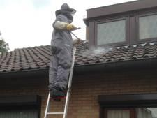 Wespenbestrijder draait overuren: 'Achtste klus vandaag'