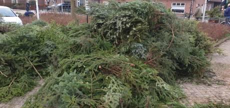 Waar naar toe met de oude kerstbomen in de Hof?