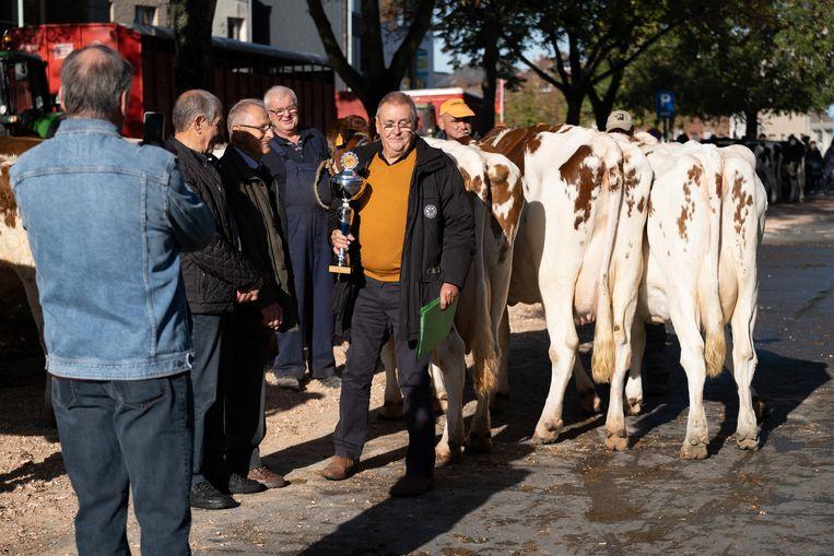 Koeien op de 171ste Jaarmarkt in Willebroek.