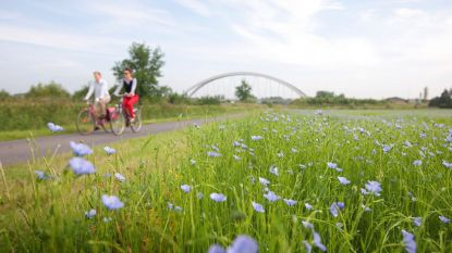 Gratis fietsroutes brengen je langs bloeiende vlasvelden, vol prachtige lavendelkleuren