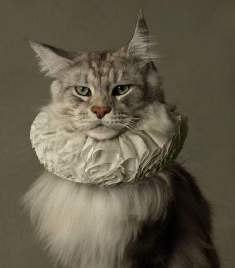 Waarom klikken we massaal op katten?