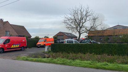 Stalbrand in Sint-Laureins: stapels stro gaan in vlammen op, 300 koeien blijven ongedeerd