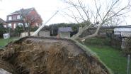 Ontwortelde boom komt in elektriciteitskabels terecht