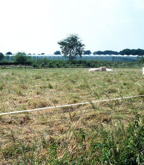 Oisterwijk zet raad van Haaren onder druk: 'Zie af van nieuw plan voor het buitengebied'