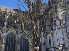 En alweer een boom minder op de Bossche Parade: 'Om onveilige situatie te voorkomen'